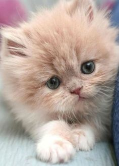 Time for a really cute and fluffy kitten…..