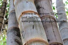 Vivência de Hunyuan Taijiquan no Parque da Água Branca com entrada Catraca Livre.