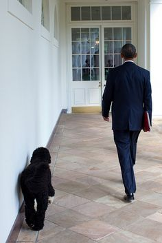 "Sept. 10, 2010  ""Headed to an event on the White House state floor, the President encountered the family dog, Bo, and they walked together along the Colonnade."" (Official White House Photo by Pete Souza)"