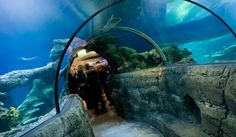 10 Best Cocktail Parties At Sea Life London Aquarium Images