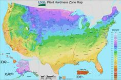 The USDA has released their new Plant Hardiness Zone Maps. Using 30 years of data, the new maps better reflect regional differences and are much easier to read. See what's changed.: The Newest USDA Plant Hardiness Zone Map for the United States Planting Zones Map, Plant Zones, Gardening Zones, Gardening Tips, Growing Zones Map, Container Gardening, Permaculture Garden, Fall Planting, Florida Gardening