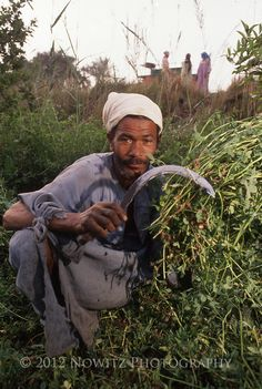 Egyptian Farmer cutting alfalfa near banks of Nile River, Egypt. People Around The World, Around The Worlds, Nile River Cruise, Life In Egypt, Kemet Egypt, Egyptian Women, Valley Of The Kings, Visit Egypt, Morocco