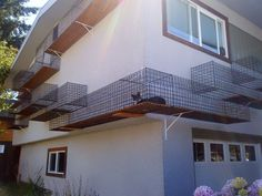 #Cat, #House