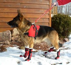 Ultimate Dog Boots for a snowy day. Rescue Dogs, Pet Dogs, Dogs And Puppies, German Shepherd Breeds, German Shepherds, Dog Booties, Tallest Dog, Malinois Dog, Dog Safety