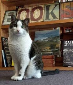 """""""hmmm....what to read next?"""" -- Booker, a book store cat"""