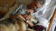 Dying Man's Final Wish to be Reunited With Dog / 「もう一度、飼っていた犬に会いたい」ホームレス男性、最期の夢を叶える http://www.kcrg.com/news/local/Dying-Mans-Final-Wish-to-be-Reunited-With-Dog-124040304.html