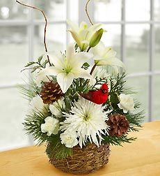 Wintertime Birds Nest of Flowers. EXCLUSIVE Invite the serenity and beauty of winter into their home with this hand-crafted mix of lilies, mums, carnations, and assorted evergreens. Artistically designed in a charming bird's nest basket and accented with birch branches, pinecones and a festive bird pick. Nature-inspired arrangement of the freshest lilies, mums, mini carnations and assorted Christmas greens, beautifully accented with pinecones, birch branches and a charming bird pick…