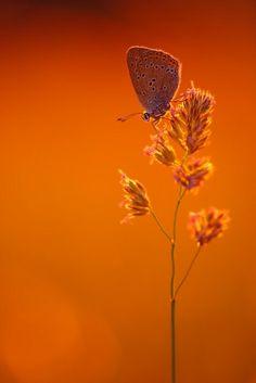 orange & butterfly by rowena Jaune Orange, Green And Orange, Orange Color, Orange Shades, Orange Twist, Burnt Orange, Orange Crush, Foto Macro, Orange Braun