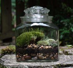 Medium Terrarium No. 1 by MossScapes on Etsy