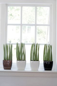 In wilt heel window sill plant shelf indoor stand. Interior Plants, Interior Exterior, Home Interior Design, Interior Decorating, Indoor Cactus Plants, Green Plants, Potted Plants, Agaves, Outside Plants