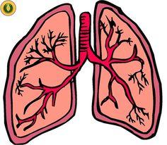 Existen muchos remedios caseros para los pulmones, que harán que mejores de todas esas situaciones...