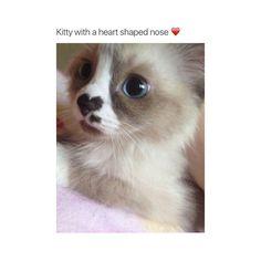 She's cute♡