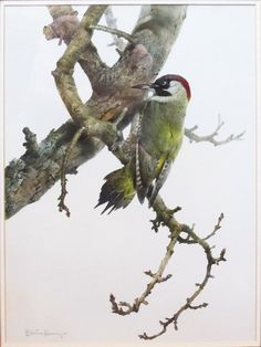Edwin Penny - Green Woodpecker, Painting For Sale at 1stdibs