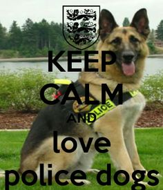 I know I am totally in love with my police GSD