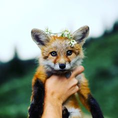 Bow down to your new leader Willow the Fox