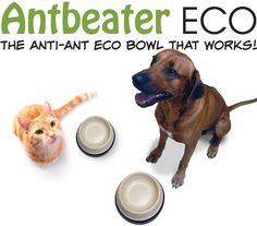 Antbeater ECO Anti-ant bowl made from natural composite bamboo fibre. carbon neutral, non-toxic and dishwasher safe. Carbon Neutral, Healthy Environment, Pet Products, Ants, Pet Care, Dog Bowls, Dishwasher, Bamboo, Natural