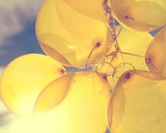 yellow balloon photograph / sunny, lemon yellow, blue sky, birthday, party, sun / shine through / 8x10 fine art photo