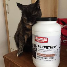 She is not the only one who loves it!  best stuff for long distance training over 3 hours. Try it! Link and Discountcode in my Bio.  #howihammer #perpetuem #instacat #catsofinstagram #catsofinstagram #cat