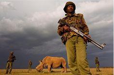 """كينيا تحمي أخر ذكر من """"وحيد القرن الأبيض"""" بقوات خاصة"""