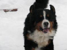 Waldo loves the snow