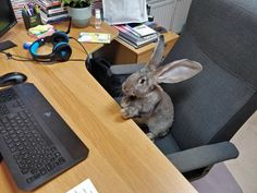 Cute Bunny Pictures, Cute Photos, Animals And Pets, Cute Animals, Netherland Dwarf, Mini Lop, Bunny Rabbits, Ferrets, Amazing Pictures