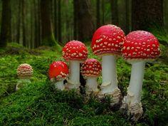 I love mushrooms!