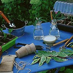 Calendrier des boutures des fleurs et arbustes d'ornements - Gestes et conseils de bouturage