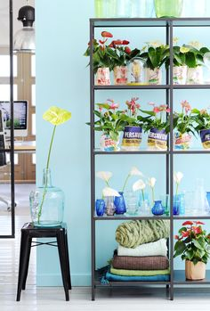 Many people are interested in information about Aloe Vera and other Beneficial Houseplants. We can help you. Just click our link to find out more. Houseplants, Indoor Plants, Ladder Decor, Tropical, Colours, Flowers, Aloe Vera, Spring, Colorful