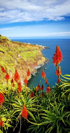 Beautiful View of Madeira Island, Portugal | 32 Stupendous Places in Portugal every Travel Lover should Visit