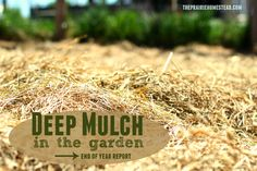 Our Deep Mulch Garden: homesteader tried deep-mulch gardening for the first time and provides readers with her impressive results and personal notes.