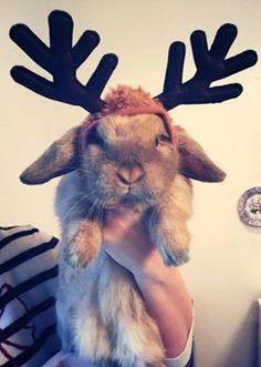 Some bunny is not pleased about the antlers.
