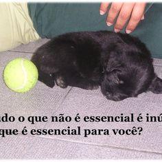 #essencial #amor #utlidade #carinho #relaxar #pet #cute #adorável #love #psicologia #psicóloga #NovaIguaçu #cognitivocomportamental #followme