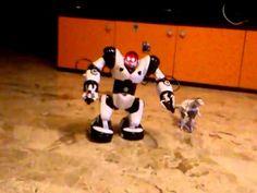 My robot toys Robosapiens