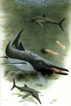 reconstruction of Platypterygius australis by Frank Knight
