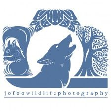 jo foo wildlife photography