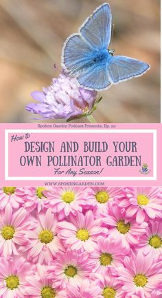 Learn how to design and build your pollinator garden. On Spoken Garden's Ep. learn pollinator garden design ideas using our garden design steps. Build, start, and maintain your own pollinator garden in any season! Layout Design, Design Ideas, Summer Blooming Flowers, Mason Bees, Garden Maintenance, How To Attract Hummingbirds, Gardening For Beginners, Gardening Tips, Gardening Books