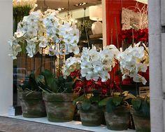 Florist shoppe window , Christmas in Paris  Virginia Jones Photography