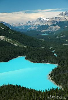 The Most Beautiful Lakes in the World Through Photos - Peyto Lake, Canada Oh The Places You'll Go, Places To Travel, Places To Visit, Dream Vacations, Vacation Spots, Banff National Park, National Parks, Rocky Mountains, Ponds