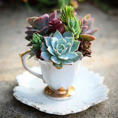 High Tea with Succulents.