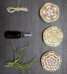DIY Jellyfish Air Plant Hanging Kit by MakersKit on Scoutmob Shoppe