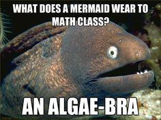 Bad Joke Eel   Know Your Meme