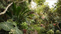 Honolulu Museum of Art  Catherine E. Bali Garden, Home And Garden, Ap World History, Stone Path, English Fun, Garden Photos, Plant Design, Start Up Business, Tropical Paradise