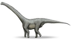 Klamelisaurus-v1.jpg (1596×916) - Dinosauria, Saurischia, Sauropodomorpha, Sauropoda, Cetiosauridae. Auteur : Debivort, 2009.