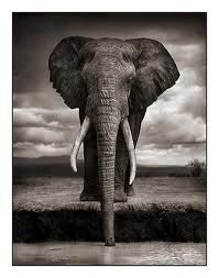 Proof that you don't need a digital camera to take extraordinary photos. Nick Brandt