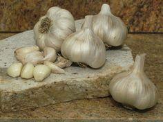 Inchillum Red Garlicweb