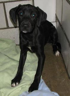 FOUND DOGS..SEE LIST>>> (click on picture to see all dogs at shelter)... COLUMBIANA DOG POUND AND ADOPTION CENTER LISBON, OHIO... http://www.petfinder.com/pet-search?shelterid=OH417 ALSO ADOPTABLE! PLEASE REPIN!!!