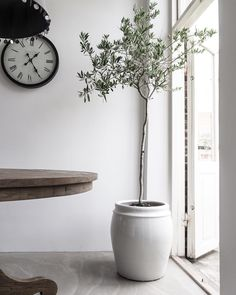 """284 gilla-markeringar, 23 kommentarer - byRakel ღ (@byrakel) på Instagram: """"~ 🌿~ planterat om mitt olivträd i en ny större kruka från #tinekhome inköpt hos @houseofpalladium"""""""