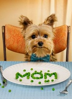 Mom will be so impressed that she won't notice he didn't actually EAT the peas. Found at:http://bit.ly/2g8vdRz   Found at: http://itsayorkielife.com/mom-will-impressed-wont-notice-didnt-actually-eat-peas/  #Yorkies,#YorkshireTerriers,#YorkshireTerrierLove,#ItsaYorkieLife