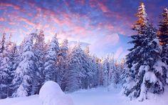 Snow Forest, The Schneewald, The Winter Szenen, Winter Magic, Winter Blue, Winter Trees, Carpathian Forest, Carpathian Mountains, Foto Picture, Snow Forest, Snow Scenes