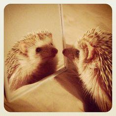 Photo by darcytheflyinghedgehog • Instagram